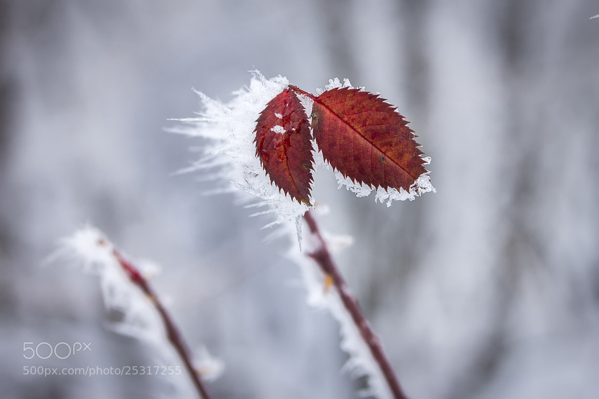 Photograph Red&white by Nick Pandev on 500px