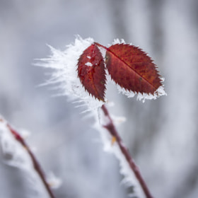 Red&white by Nick Pandev (NickPandev)) on 500px.com