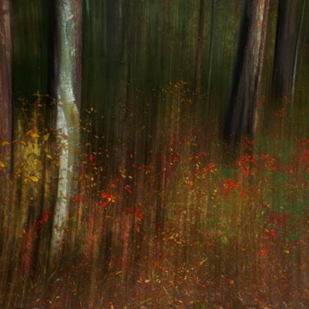 Autumn rain, Sony SLT-A57, Tamron Lens (255)