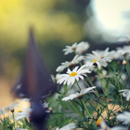 secret garden, Nikon D300, AF Nikkor 85mm f/1.8D