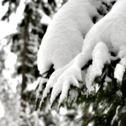 Snow, Nikon D700, Sigma 50mm F1.4 EX DG HSM
