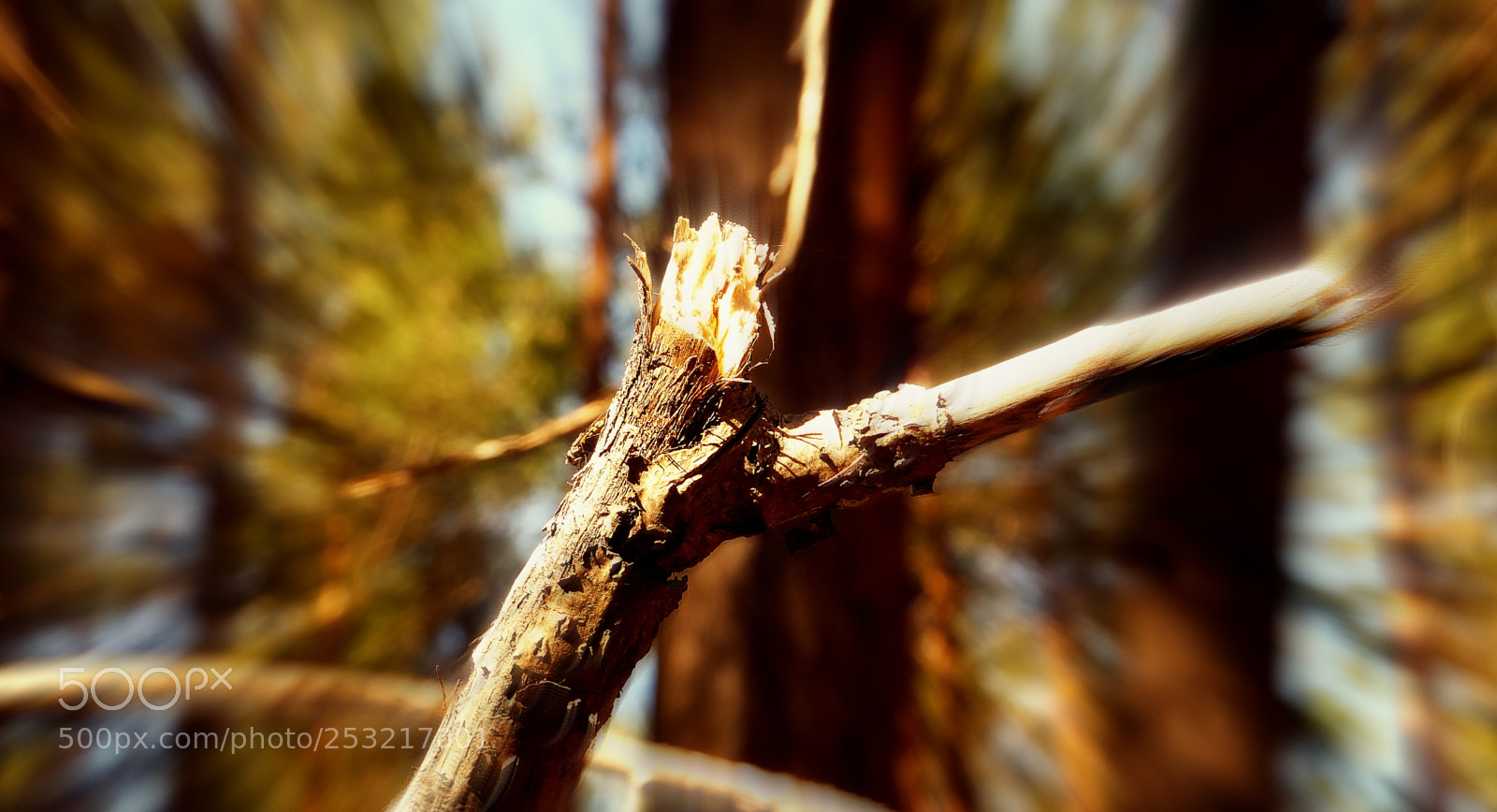 "Fujifilm FinePix F660EXR sample photo. ""Tree branch"" photography"