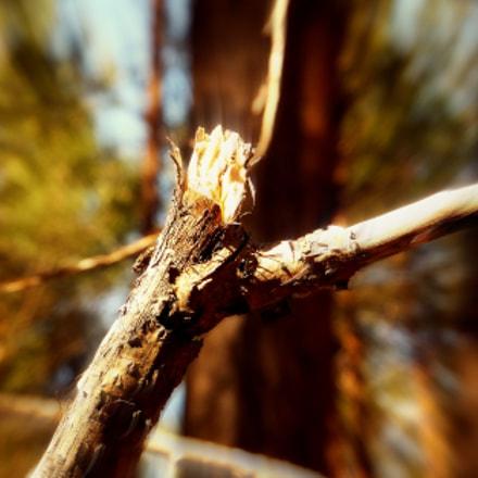 Tree branch, Fujifilm FinePix F660EXR
