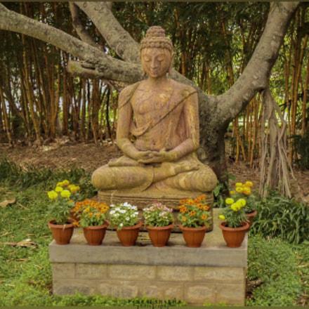 Budha..., Sony DSC-S1900