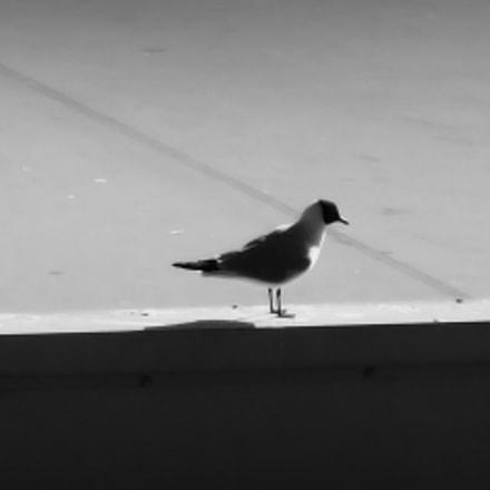 Bird on a building, Fujifilm FinePix F660EXR