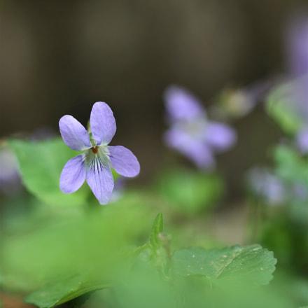 Spring fairy, Canon EOS 60D, Sigma 50mm f/1.4 EX DG HSM