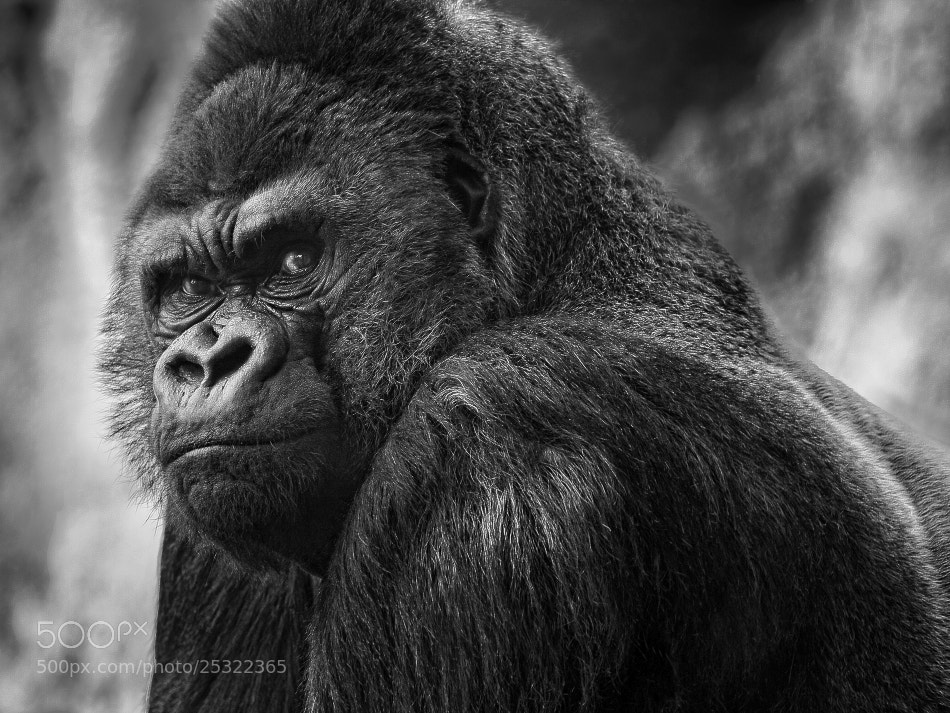 Photograph What are you looking at? by Jose Beut on 500px