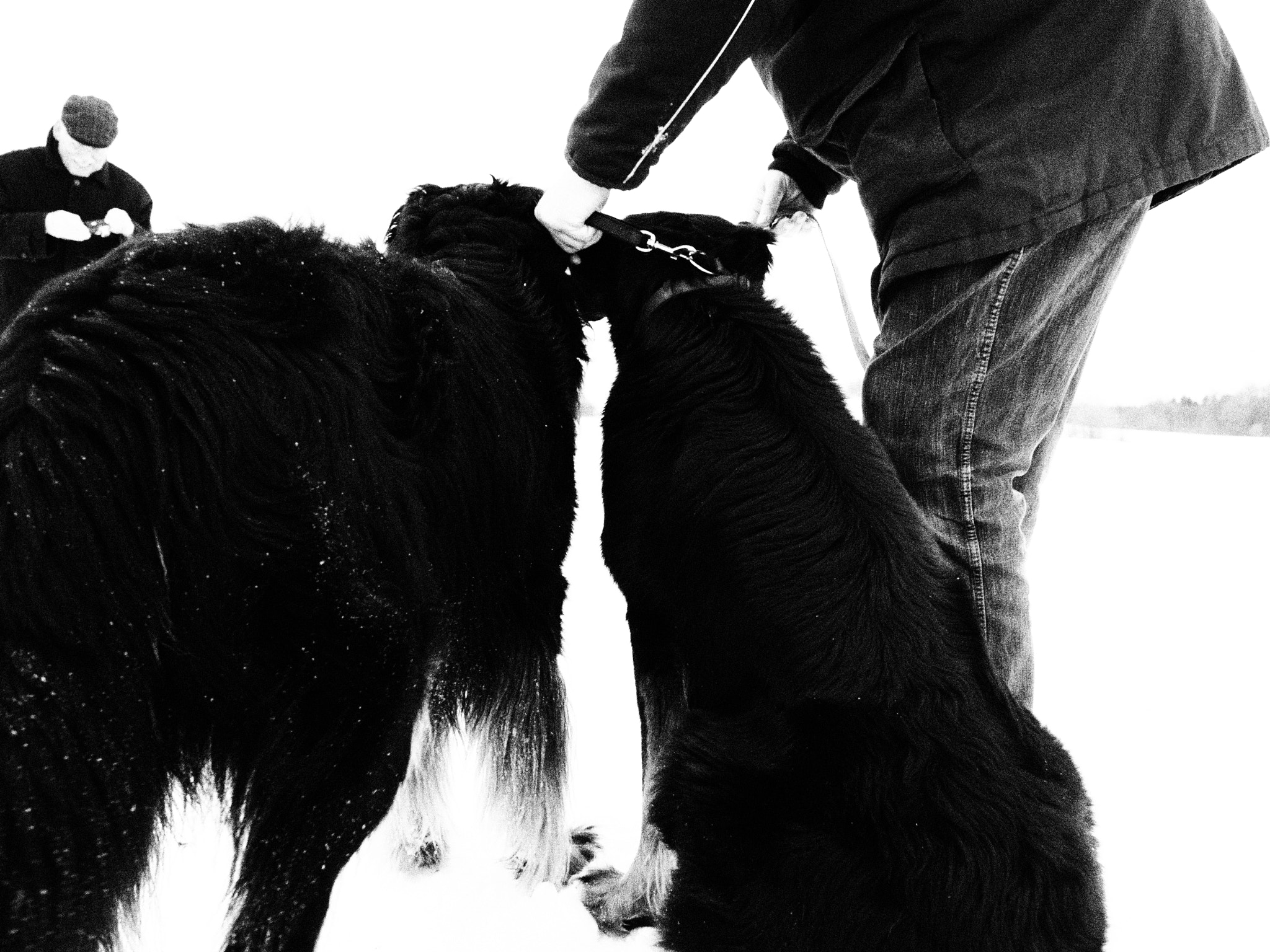 Photograph Dogs and men by Oliver Weigel on 500px