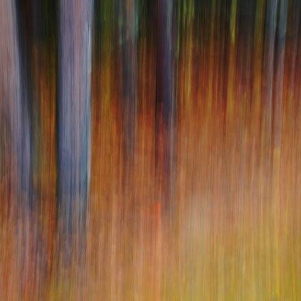 Fire wood, Sony SLT-A57, Tamron Lens (255)