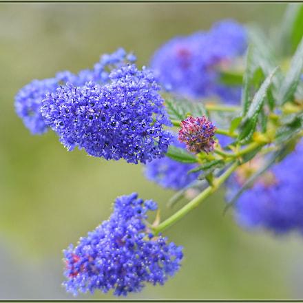 Wildflower Season, Nikon D850, Sigma APO 120-400mm F4.5-5.6 DG OS HSM