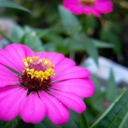Pinky Flowers, Fujifilm XQ2