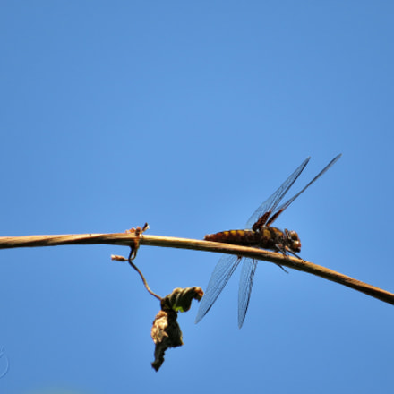 Dragonfly_2, Canon POWERSHOT SX540 HS