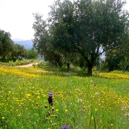 Mediteranean spring, Sony DSC-W150