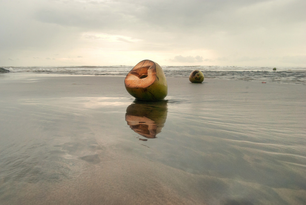 Photograph Who poured the water inside coconut ? by Dhileeban Kumaresan on 500px