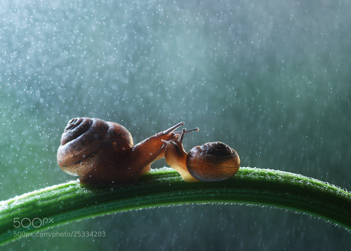 Photograph meeting under the rain by Vadim Trunov on 500px