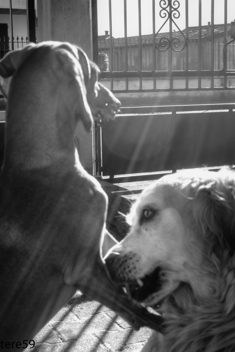 Photograph i miei cani by tere59  on 500px