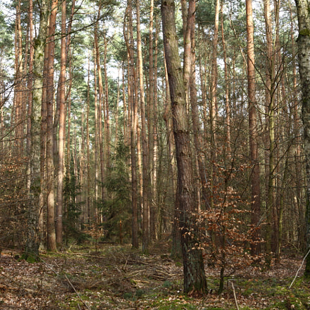 Mixed Forest, Canon EOS 5D MARK II, Canon EF 28-80mm f/3.5-5.6