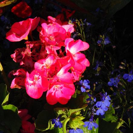 Flowers, Sony DSC-H200