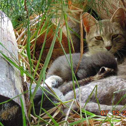 Cat with her babies, Sony DSC-H200