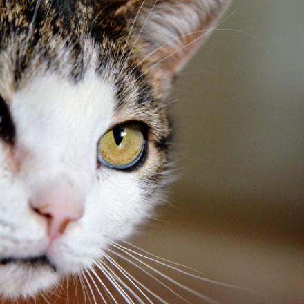 cat eyes, Nikon D7000, AF Zoom-Nikkor 24-85mm f/2.8-4D IF