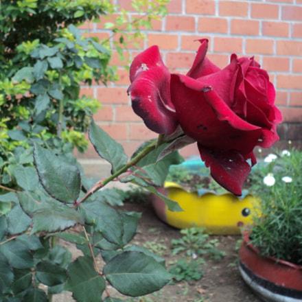 Rosa, Sony DSC-S2100