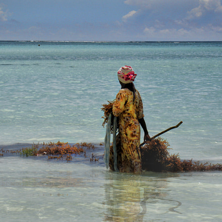 Raccoglitrice di alghe, Sony DSC-V3