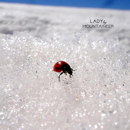 ladybug, Sony DSC-P200