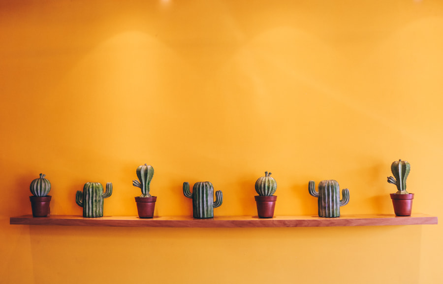 Cactus by Huy Tran ? on 500px.com