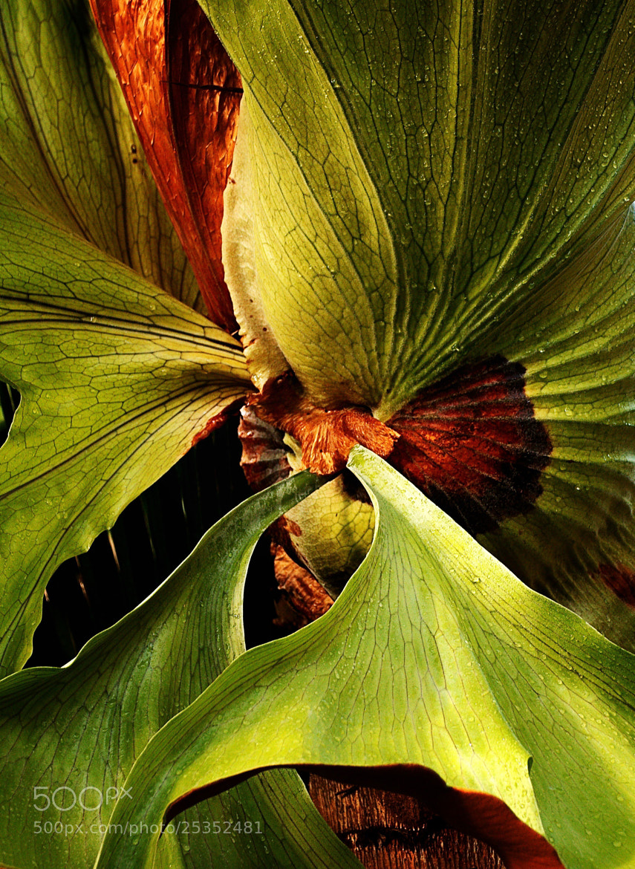 Photograph Swirl by Johnny Gomez on 500px