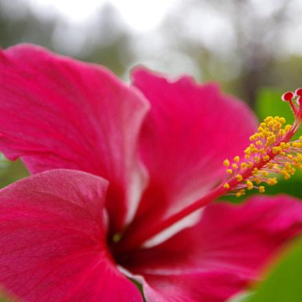 Flower, RICOH PENTAX K-3 II