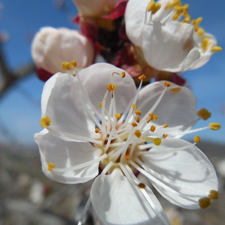 Blossom, Nikon COOLPIX L620