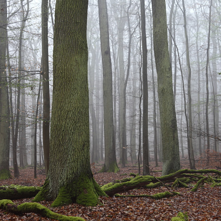 Misty Forest, Canon EOS 5D MARK II, Canon EF 28-80mm f/3.5-5.6