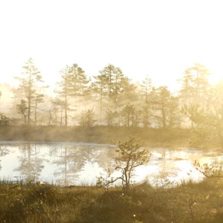 dawn*, Sony ILCE-7M2, Sony DT 16-50mm F2.8 SSM (SAL1650)