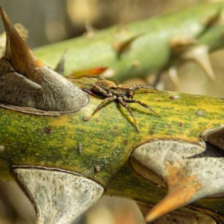 spider...., Nikon COOLPIX L330