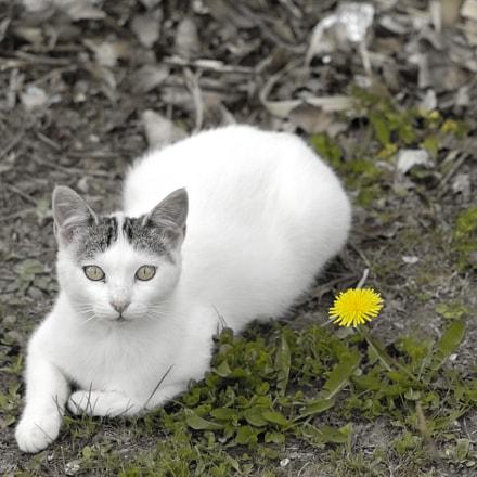 cat resting, Nikon D2X, Sigma Macro 105mm F2.8 EX DG