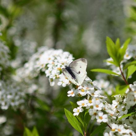 花に蝶, Nikon D7500, Sigma Macro 105mm F2.8 EX DG