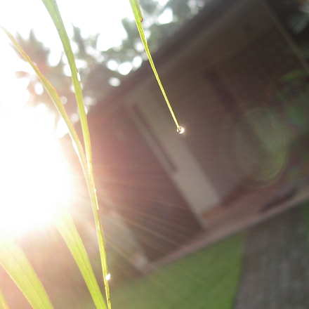Sunrays in front of, Canon POWERSHOT A550