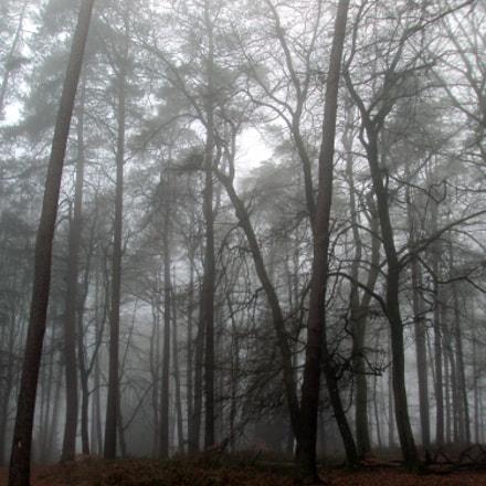 Forêt d'ici, Sony DSC-S980