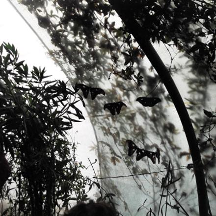 Butterfly baby , Fujifilm FinePix L50