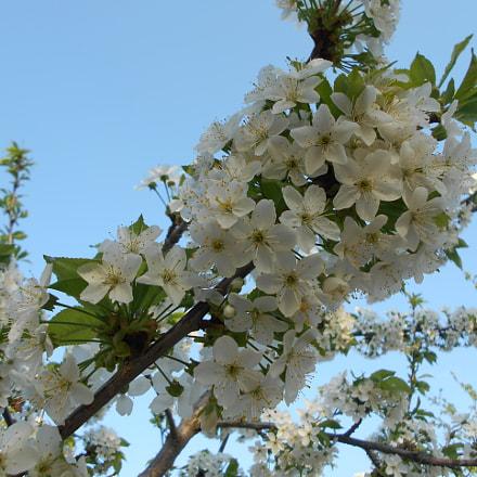 Spring flowers, Nikon COOLPIX L28