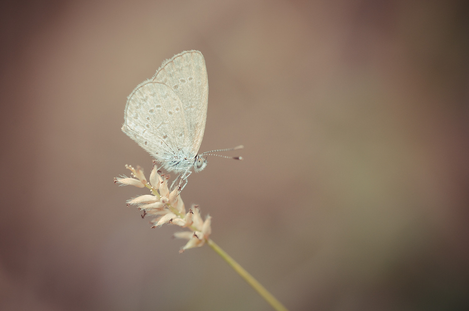 Photograph Butterfly by Peerasith Chaisanit on 500px
