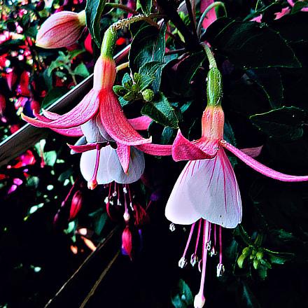 fiori, Panasonic DMC-FS5