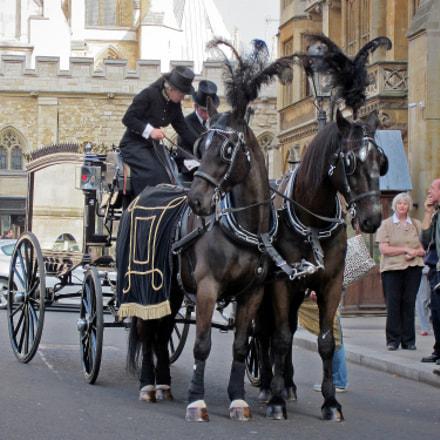 Handsome Horses, Canon POWERSHOT ELPH 300HS