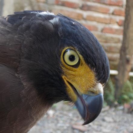 Hawk_eyes, Nikon COOLPIX L320