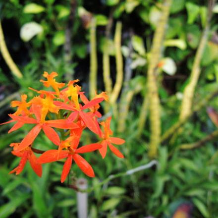 Orange, Nikon COOLPIX P310