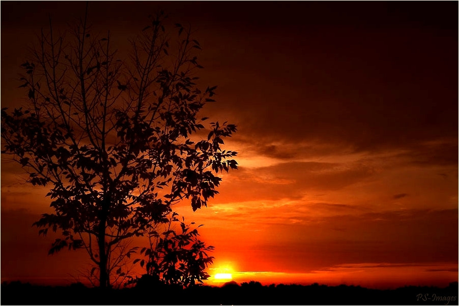Photograph sunset by prince sharma on 500px