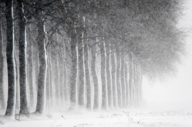 Photograph Blizzardous Sunday by Daniel Bosma on 500px