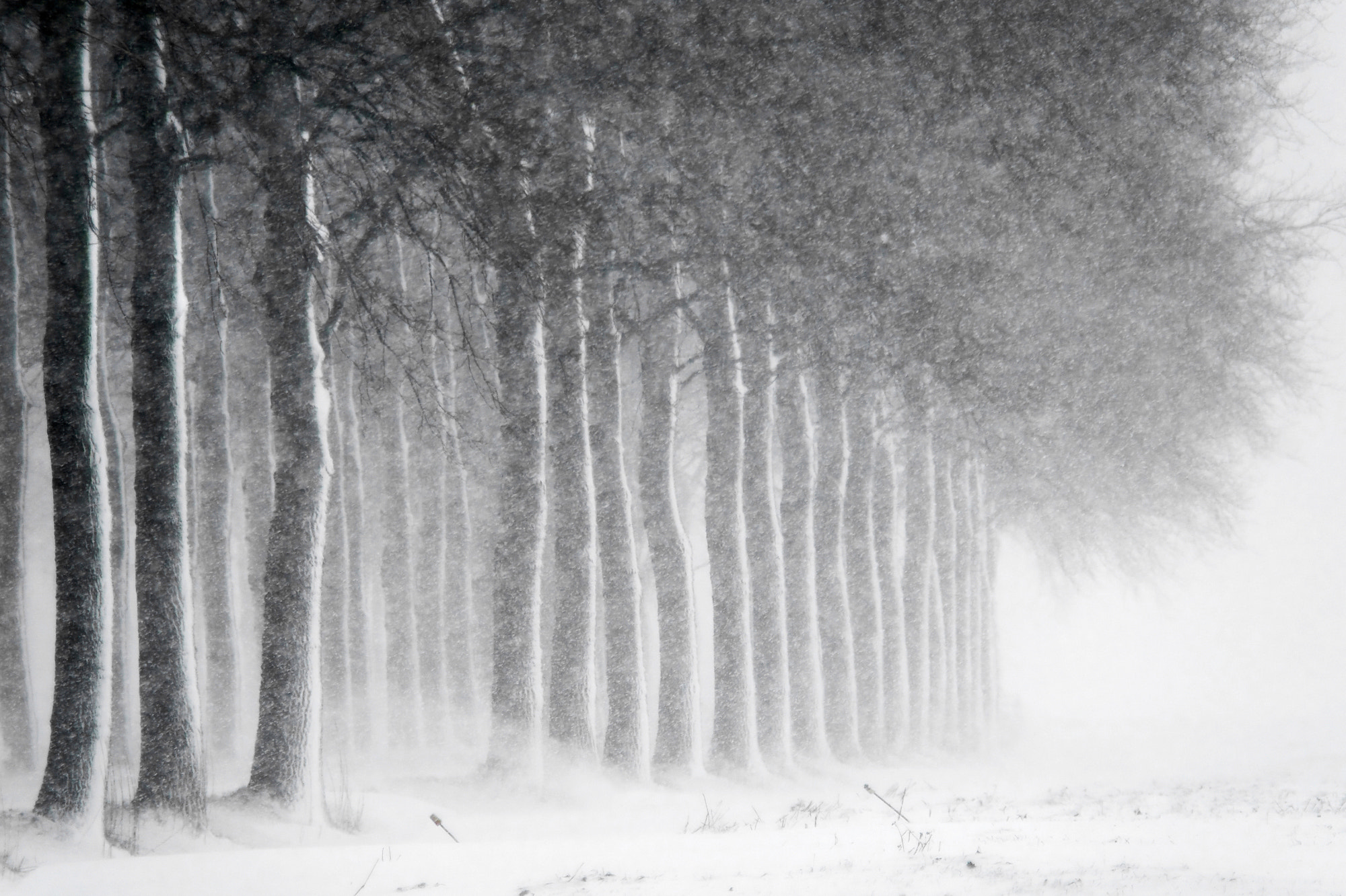 Photograph Blizzardous Sunday by Daniel Bosma on 500px