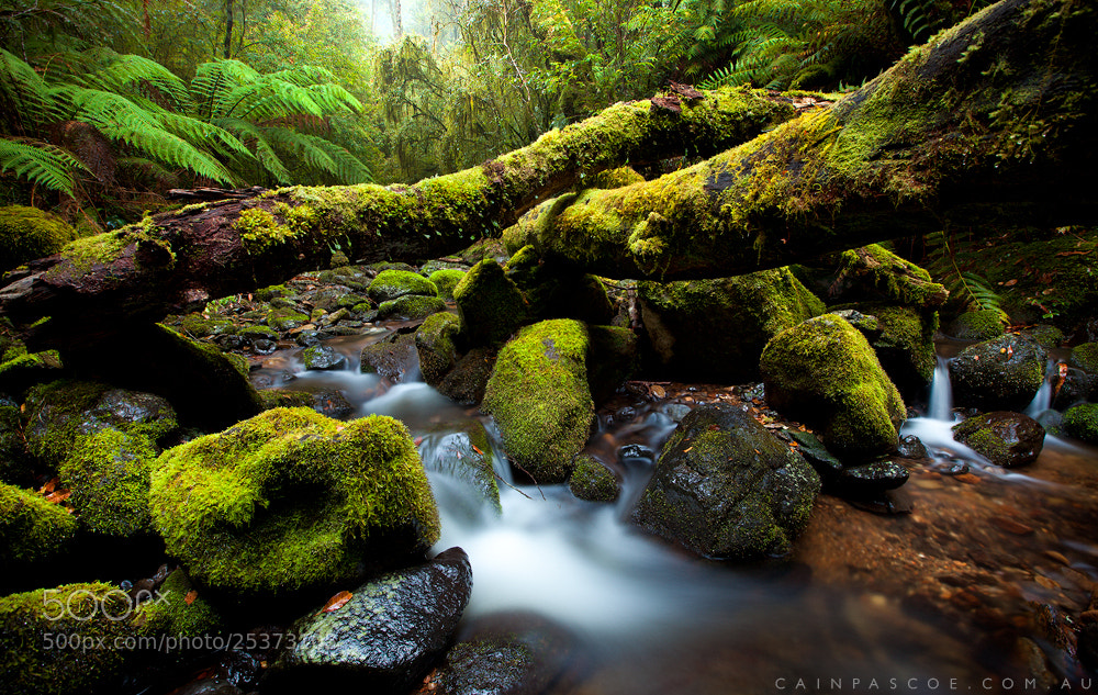 Photograph Lush by Cain Pascoe on 500px