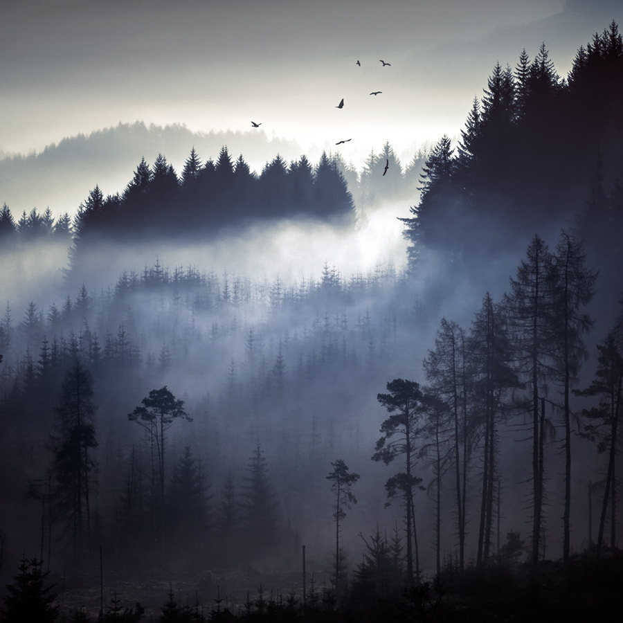 Photograph Above the pines... by David Mould on 500px